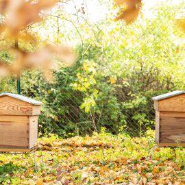 installation ruches